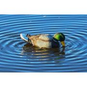 MOJO OUTDOORS RIPPLER MALLARD